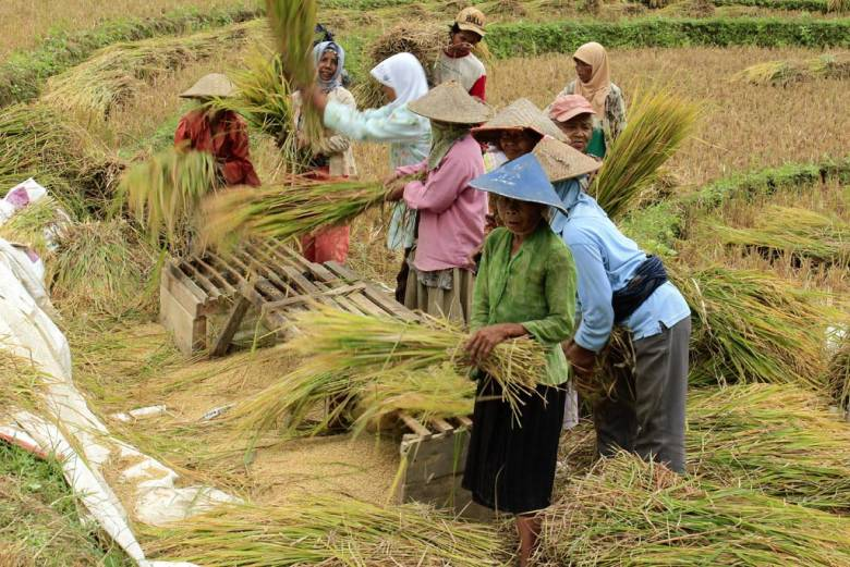 Pertanian Urat Nadi Pembangunan Berkelanjutan Khas Indonesia