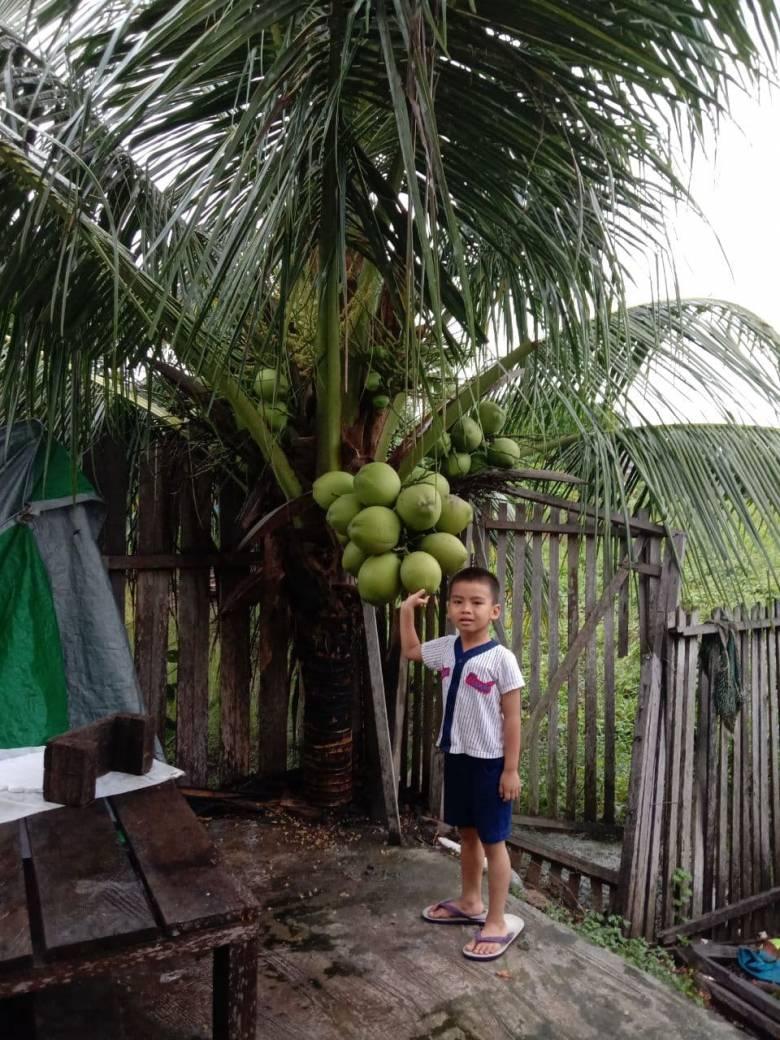 """Si """"Coconut"""" dengan Berjuta Manfaat"""
