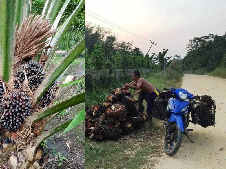 Norman Jiwan|  Kita Bantu Petani Mandiri