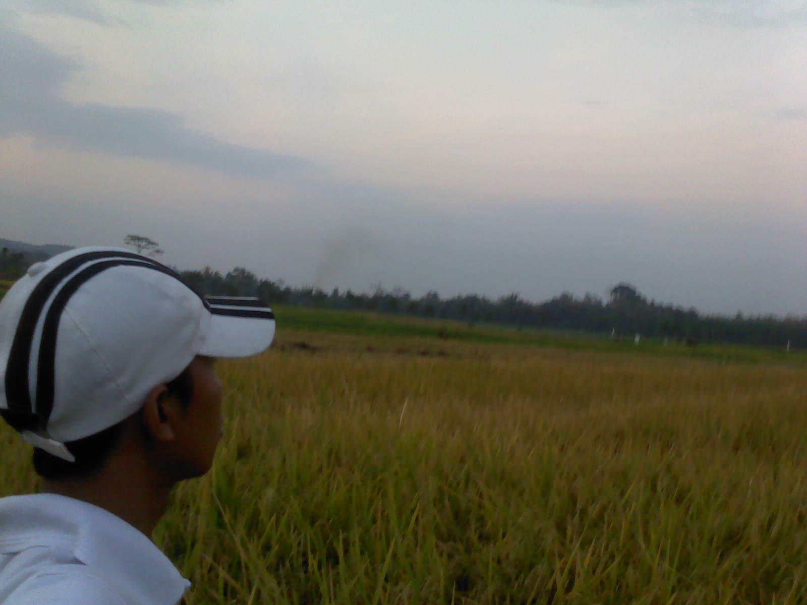 Peran Vital Petani jadi Penyangga Indonesia